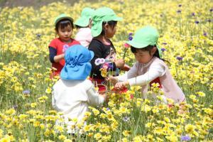 無料花摘み